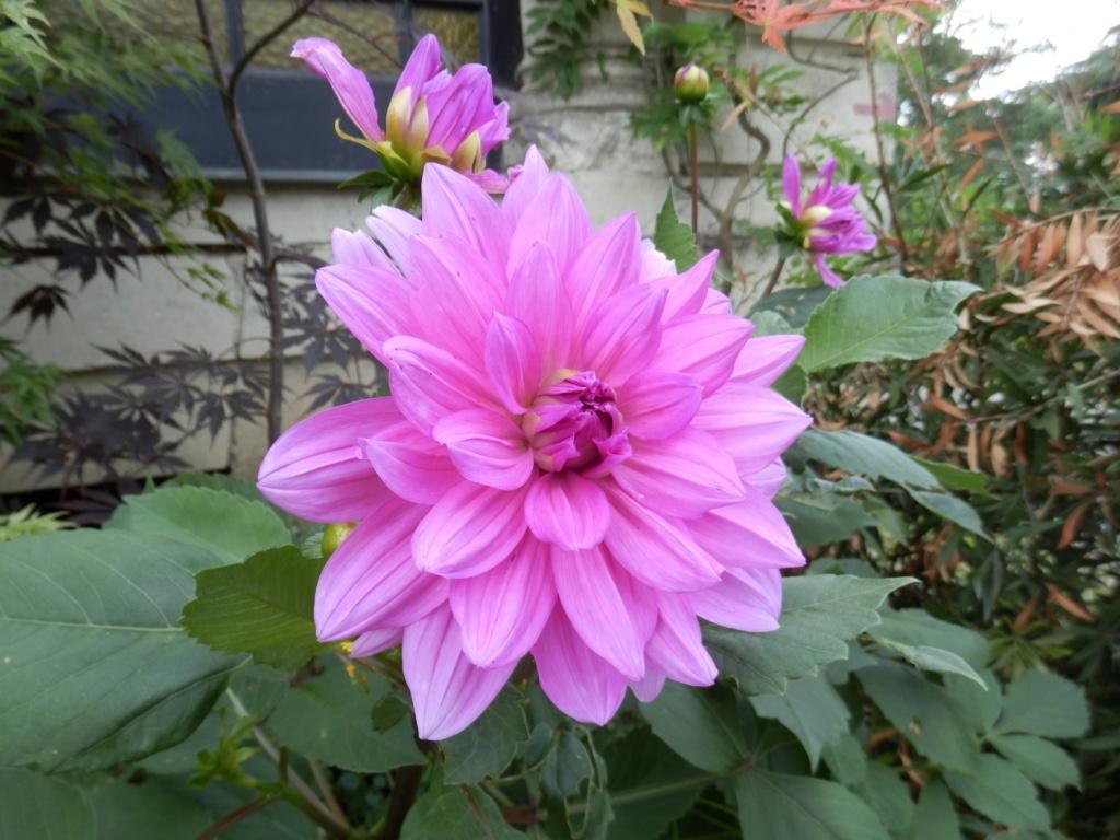 5 juillet : une ou des fleurs 5_juil10