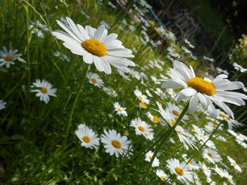 Rendez-vous aux jardins à Wangen les 6 et 7 juin 2015 avec l'association Découvrir. 10672110
