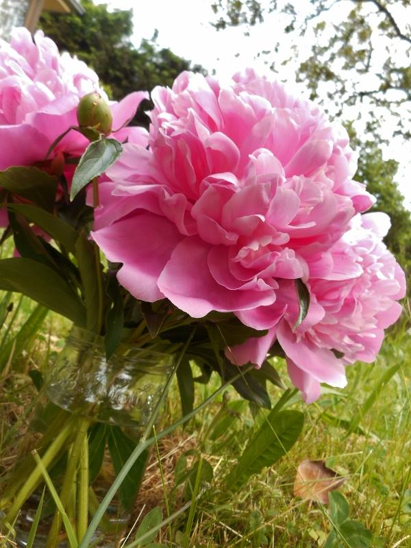 Rendez-vous aux jardins à Wangen les 6 et 7 juin 2015 avec l'association Découvrir. 11234910