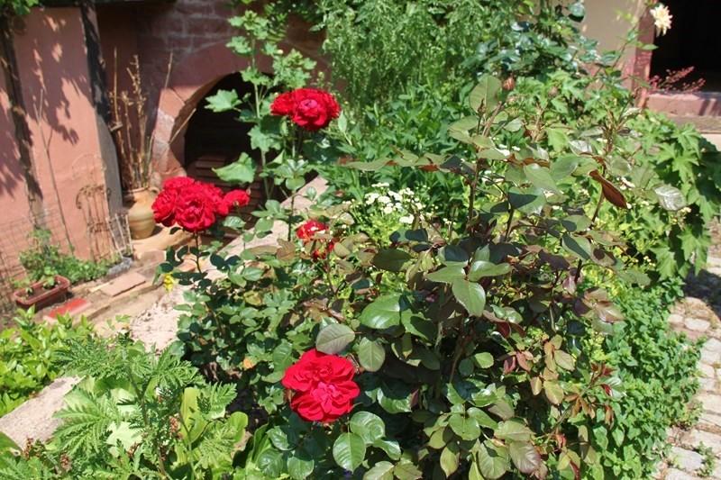 Rendez-vous aux jardins à Wangen les 6 et 7 juin 2015 avec l'association Découvrir. Img_6914