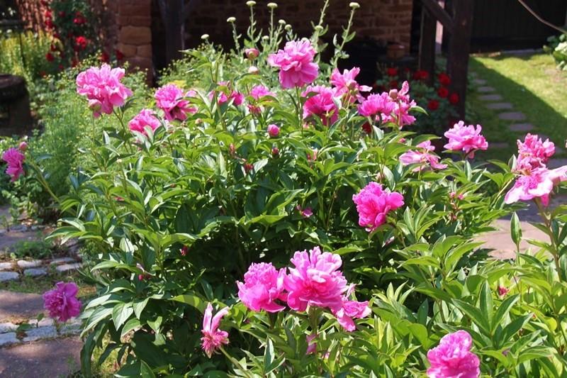 Rendez-vous aux jardins à Wangen les 6 et 7 juin 2015 avec l'association Découvrir. Img_6916