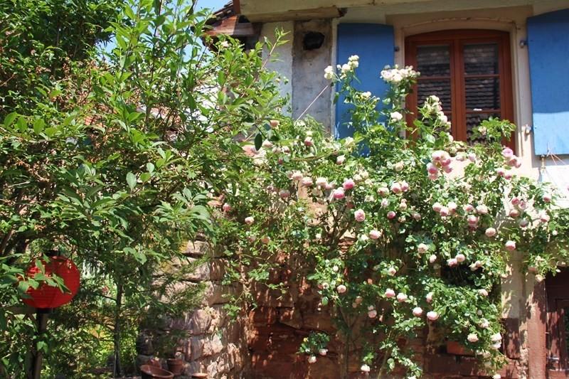 Rendez-vous aux jardins à Wangen les 6 et 7 juin 2015 avec l'association Découvrir. Img_6924