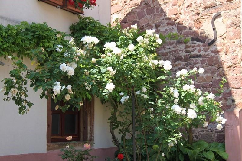 Rendez-vous aux jardins à Wangen les 6 et 7 juin 2015 avec l'association Découvrir. Img_7034