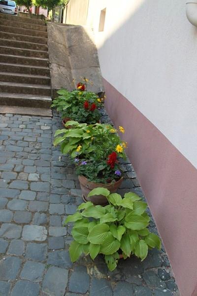 Rendez-vous aux jardins à Wangen les 6 et 7 juin 2015 avec l'association Découvrir. Img_7035
