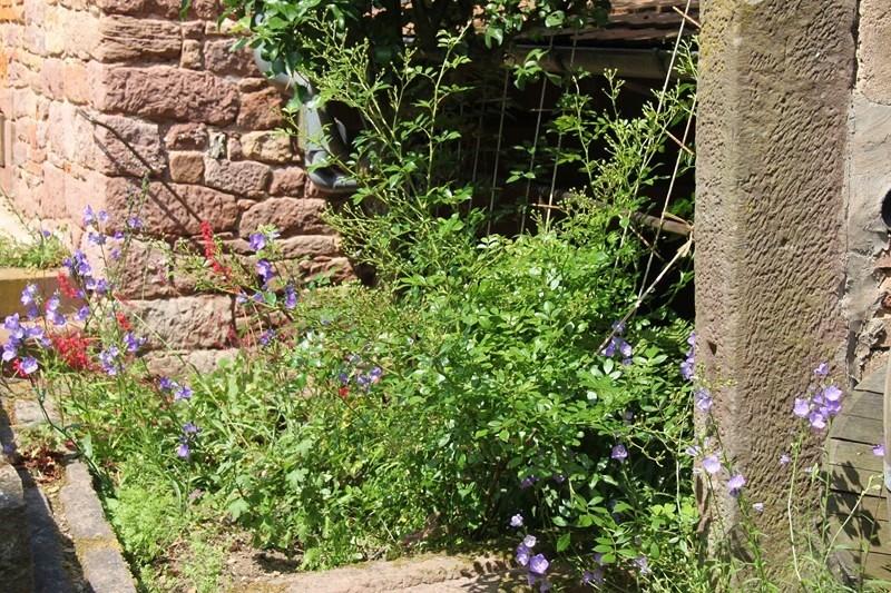 Rendez-vous aux jardins à Wangen les 6 et 7 juin 2015 avec l'association Découvrir. Img_7039