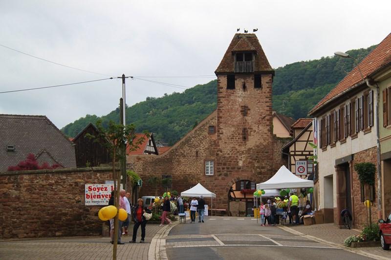 11 ème édition du Marathon du Vignoble d'Alsace et son passage à Wangen le 21 juin 2015 Img_8010