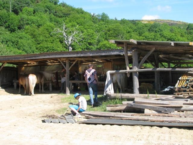 équitation dans un lieu qui respecte les chevaux et l'environnement Img_1010