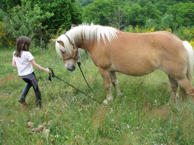 équitation dans un lieu qui respecte les chevaux et l'environnement Img_1012