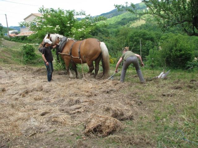 équitation dans un lieu qui respecte les chevaux et l'environnement Img_1013