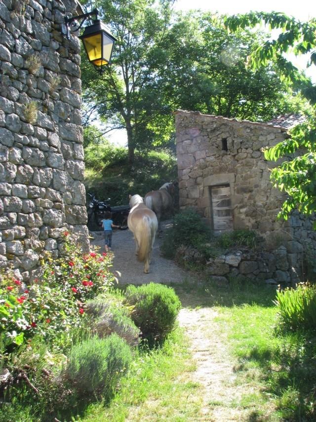 équitation dans un lieu qui respecte les chevaux et l'environnement Img_1014