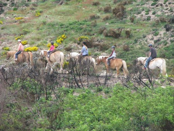 équitation dans un lieu qui respecte les chevaux et l'environnement Img_1111