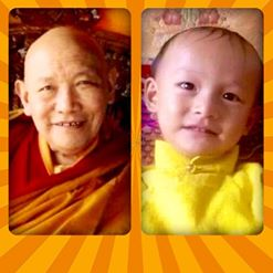Retour de Trulshik Rinpoché Trul10