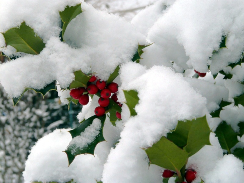 neige dans le 04 Houx_r10
