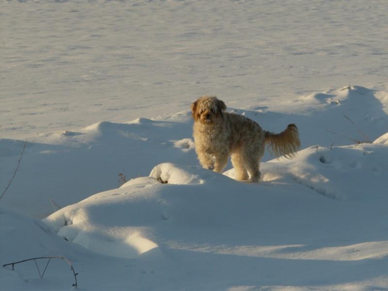 neige dans le 04 Luna_110