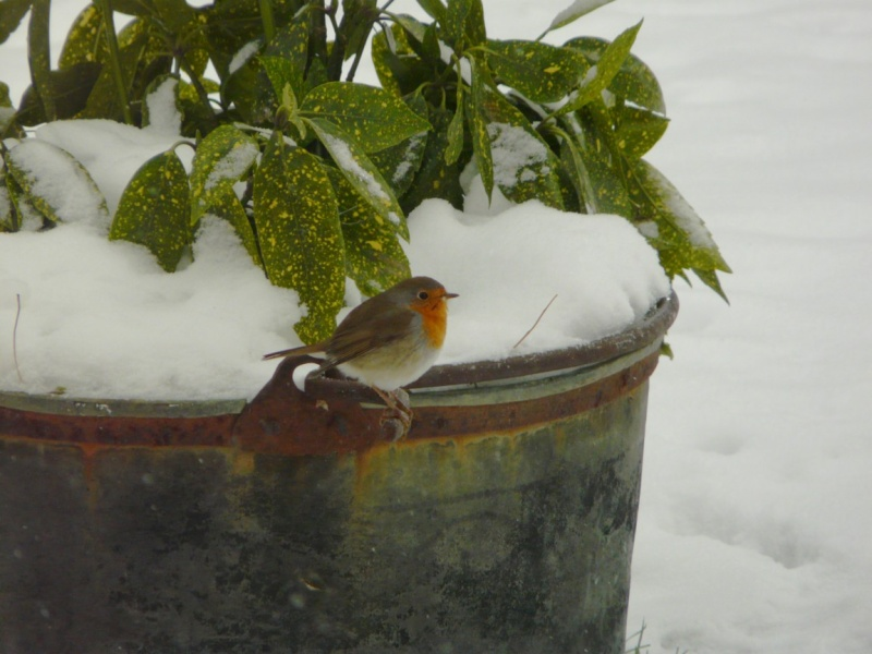 neige dans le 04 Oiseau11