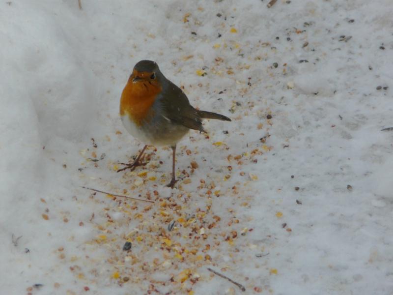neige dans le 04 Oiseau12