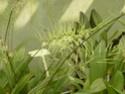Chévreloup le 16 07 15 : Assortiment de fleurs  Brassi11