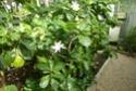 Chèvreloup  le 16 07 15  Garden10