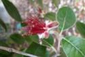 3 jolies plantes grimpantes ou pas des hémicycles  P1130021