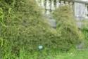 3 jolies plantes grimpantes ou pas des hémicycles  P1130026
