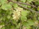 3 jolies plantes grimpantes ou pas des hémicycles  P1130028