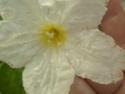 Plante  sans nom des régions australes  P1130316