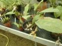 Chévreloup le 16 07 15 : Assortiment de fleurs  Stanho10