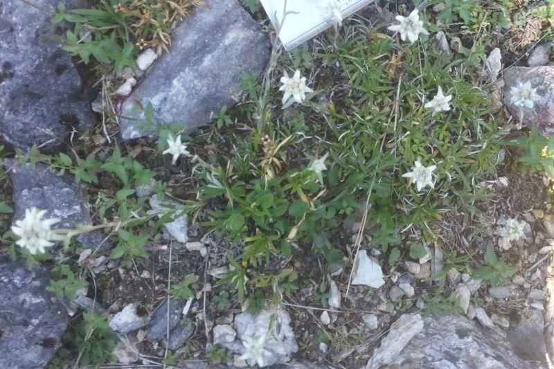 Jardin botanique alpin Paradisia, Cogne, Vallée d'Aoste (IT) 20150824