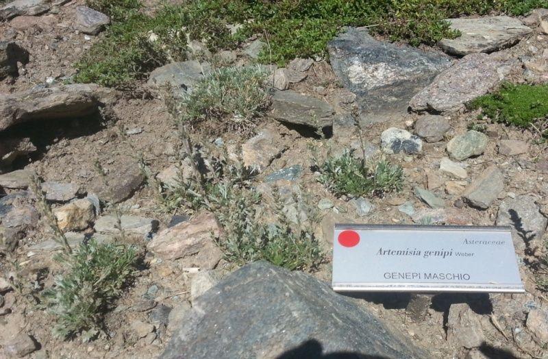 Jardin botanique alpin Paradisia, Cogne, Vallée d'Aoste (IT) 20150828