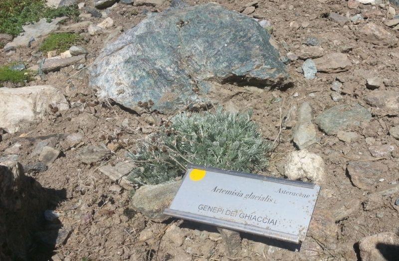 Jardin botanique alpin Paradisia, Cogne, Vallée d'Aoste (IT) 20150829