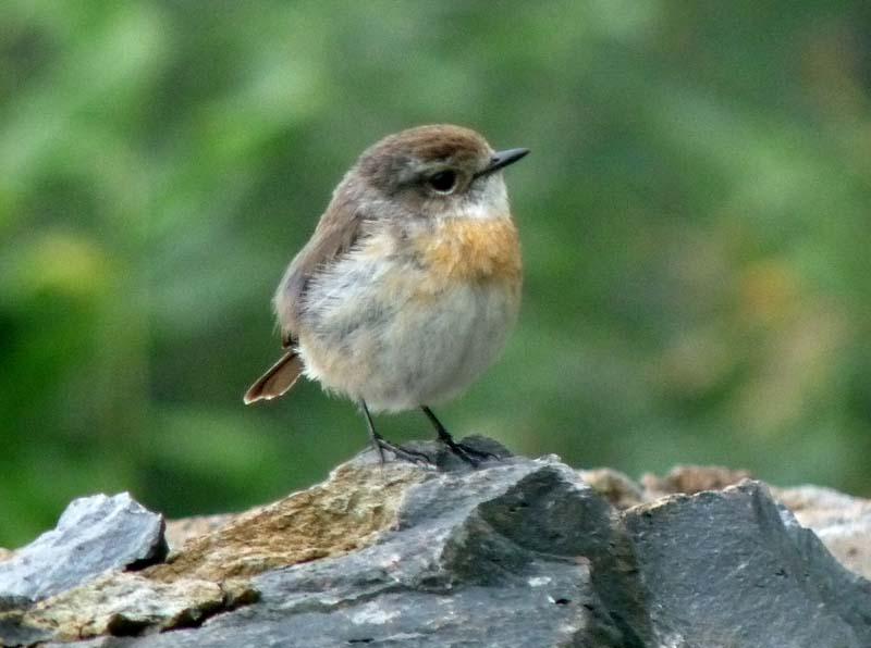 et quelques oiseaux de la Réunion... Rtecte10