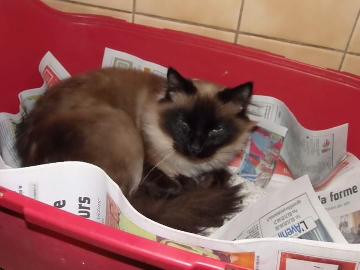 Photos des chats sauvés, avant/après - Page 8 Avant_10