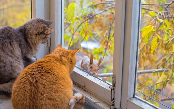 le chat est l avenir de l homme Chjzfx10