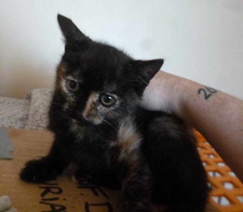 4 chatons et leur maman : Adoption Paris / RP P1300112