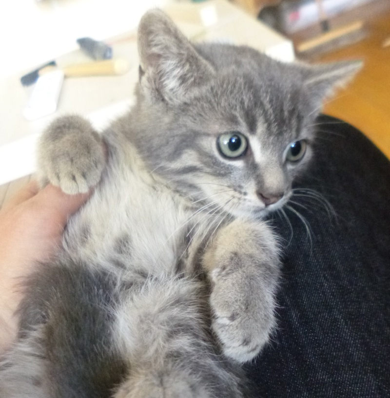 4 chatons et leur maman : Adoption Paris / RP P1300210