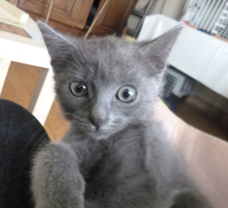 4 chatons et leur maman : Adoption Paris / RP P1300211