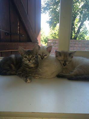 chatons trop mignons Chaton10