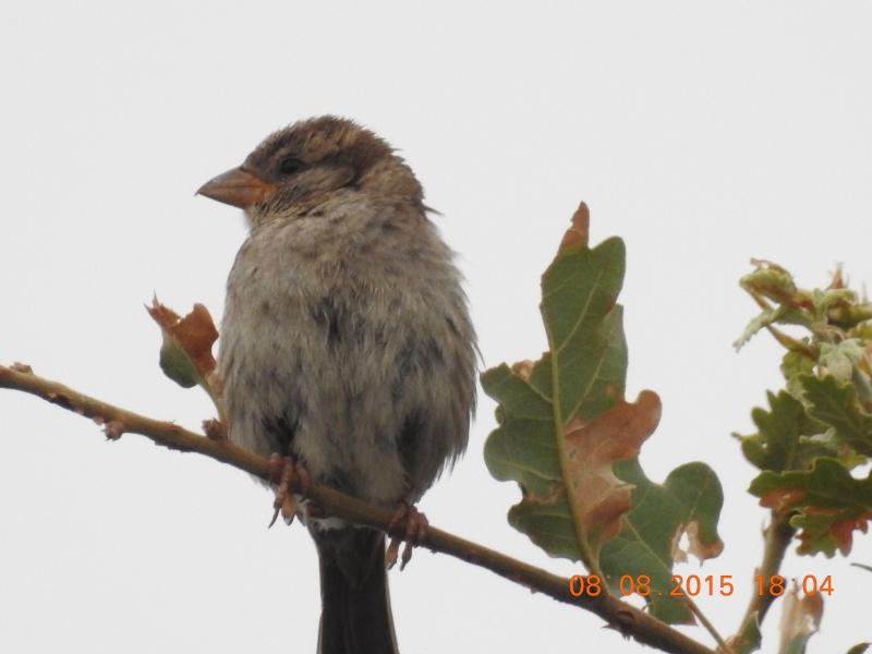 Quel est cet oiseau ? Dscn0410