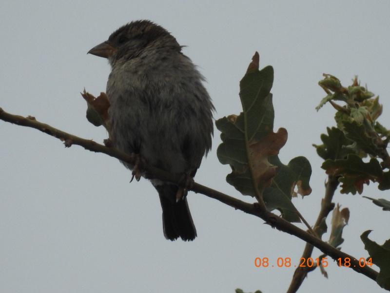 Quel est cet oiseau ? Dscn0411