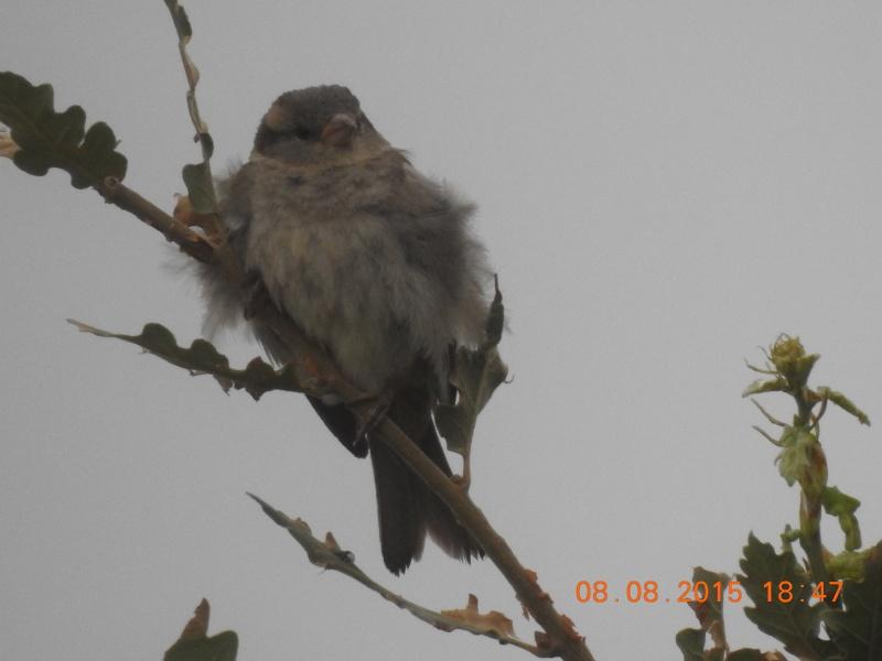 Quel est cet oiseau ? Dscn0412