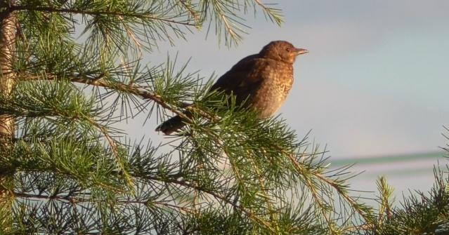 Quel est cet oiseau ? Oiseau11