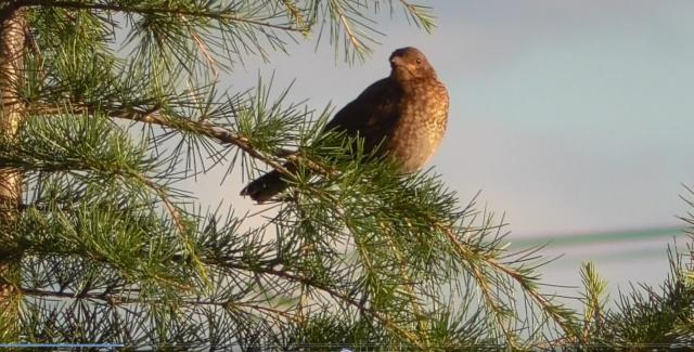 Quel est cet oiseau ? Oiseau12