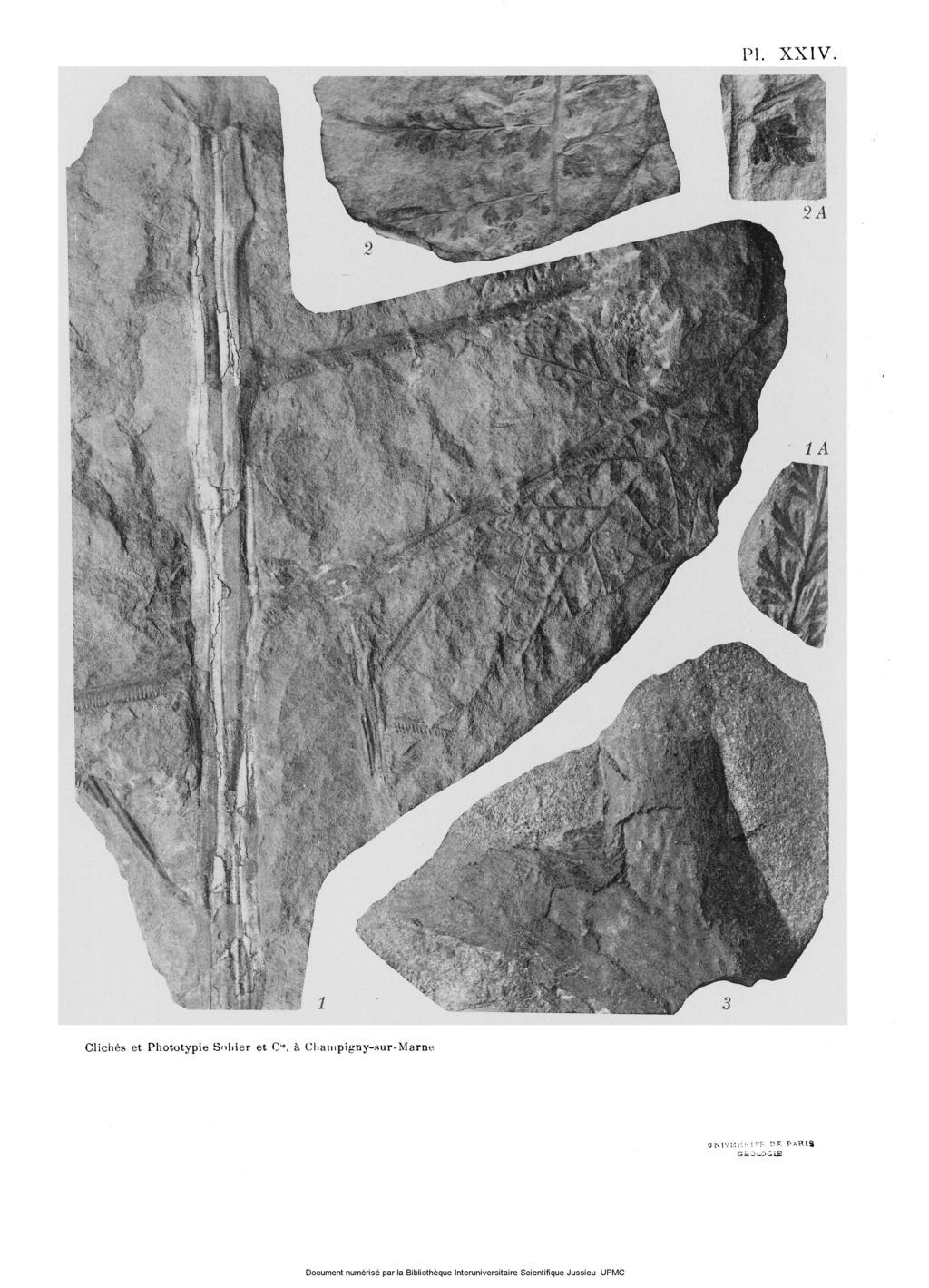Flore Carbonifère des Alpes Françaises part 2 - Page 3 Bassin11
