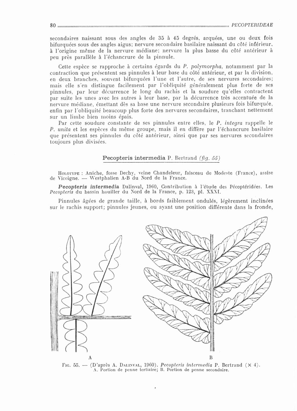 Flore Carbonifère des Alpes Françaises part 2 - Page 4 Bourea10