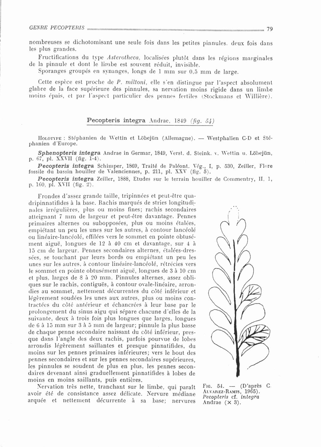 Flore Carbonifère des Alpes Françaises part 2 - Page 4 Bourea11