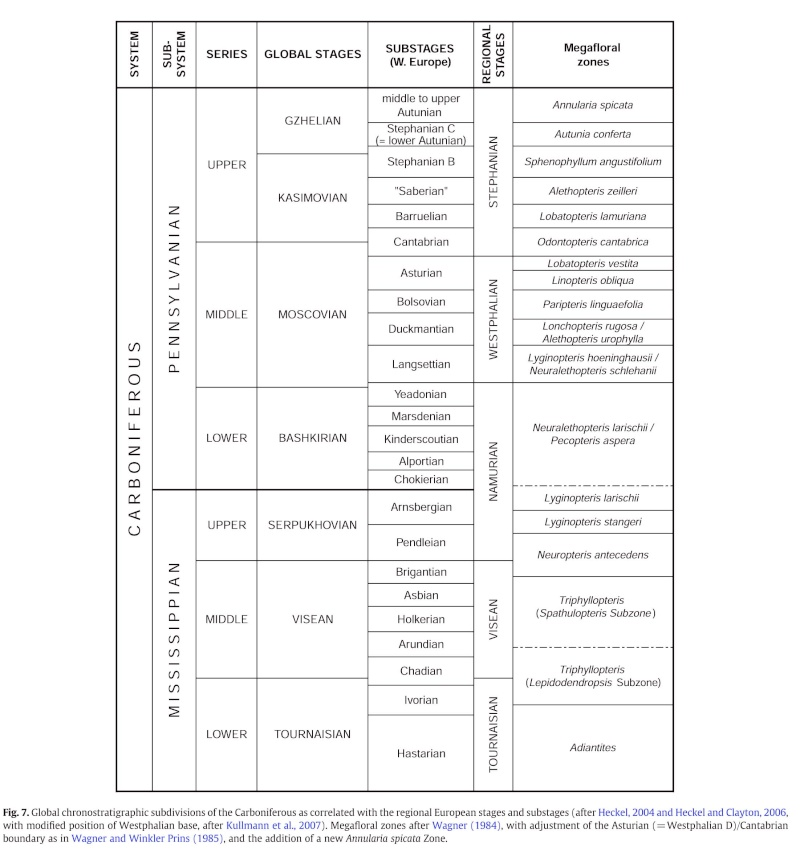 Sphenopteris du Stéphanien B Figure10
