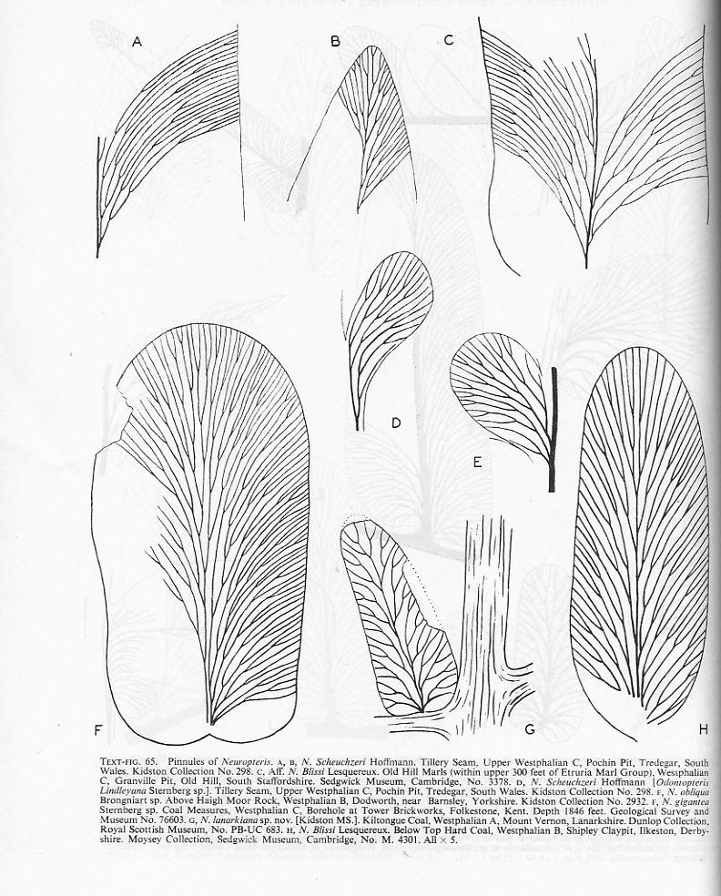 Flore Carbonifère des Alpes Françaises part 2 - Page 3 File2710