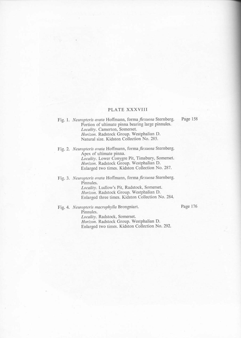 Flore Carbonifère des Alpes Françaises part 2 - Page 4 File2812