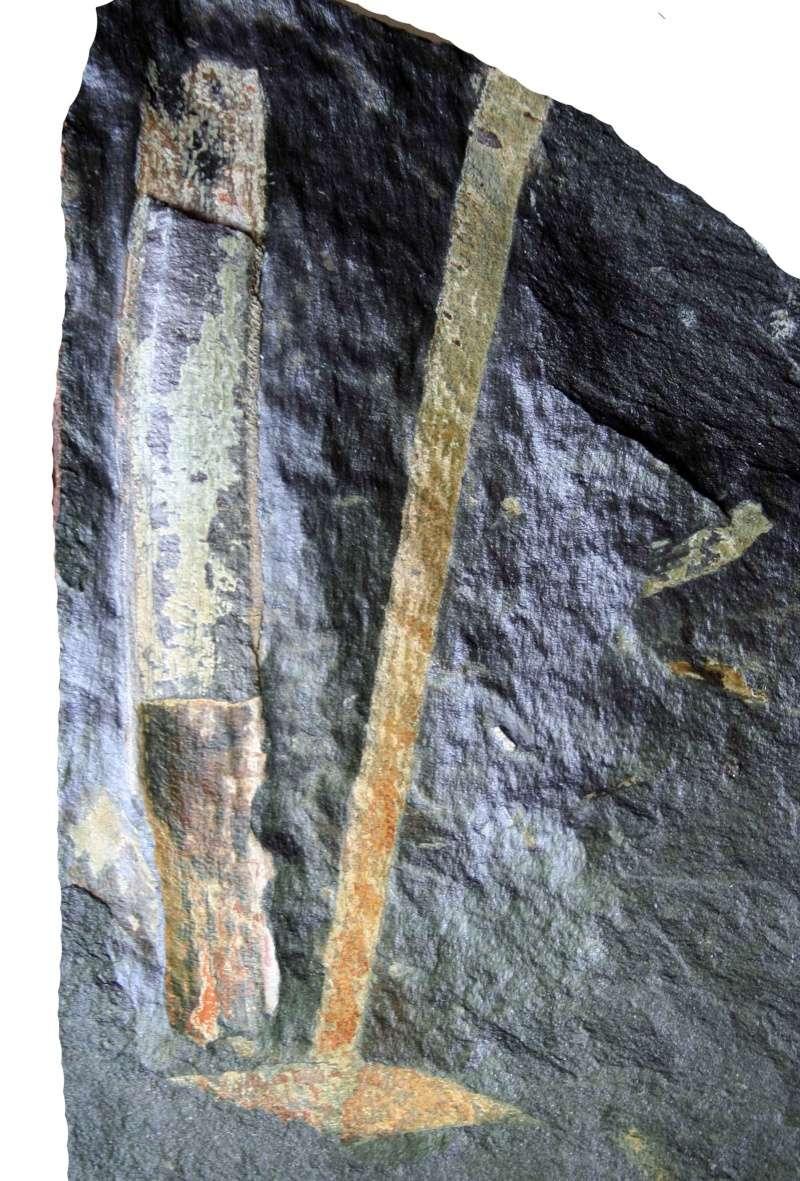 Flore Carbonifère des Alpes Françaises part 1 Img_2515