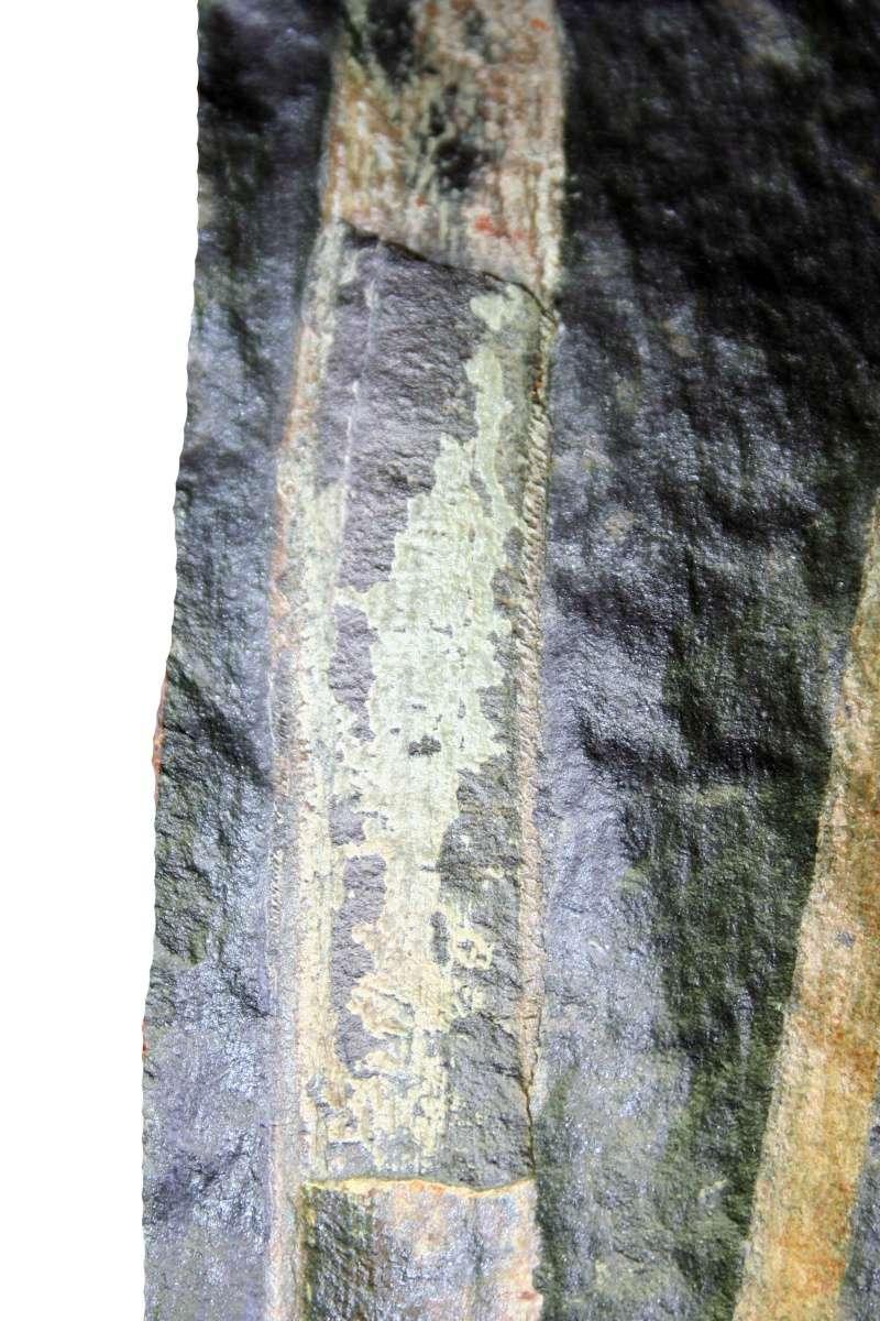 Flore Carbonifère des Alpes Françaises part 1 Img_2522